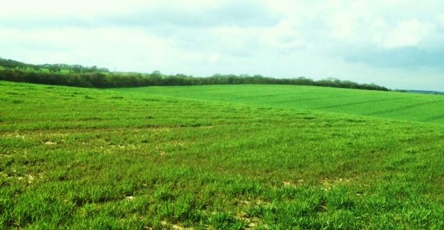 green grass for blog