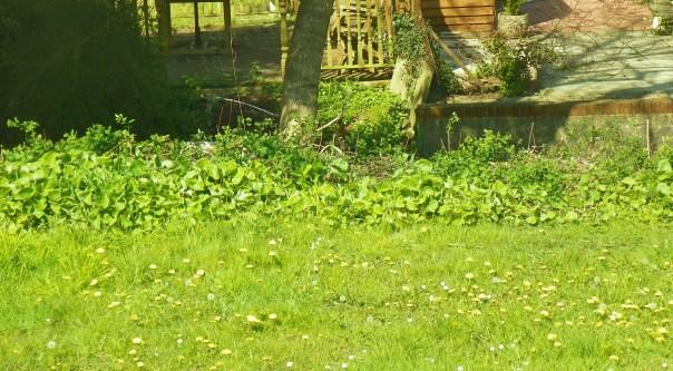 greens in studio garden