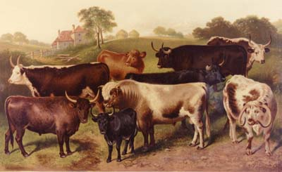 Who doesn't love a brown cow? - BREEDS OF CATTLE, Corbould, 1879