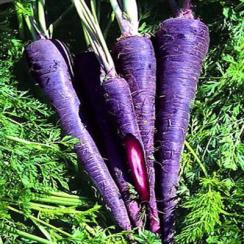 interesting-facts-about-purple-carrots-21694984